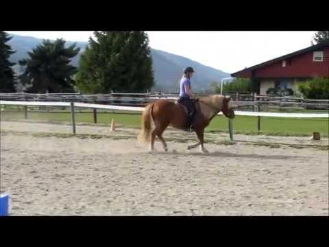 Brimi - 2008 Icelandic horse gelding - For Sale