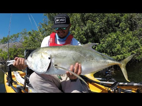 Big Jacks In Tampa Bay, Florida | St. Pete Kayak Fishing