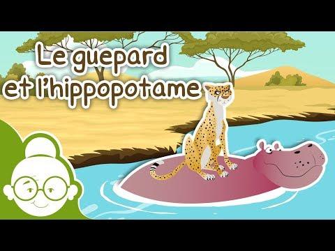 Le guépard et l'hippopotame - Histoires avant de s'endormir - Histoire pour Enfants