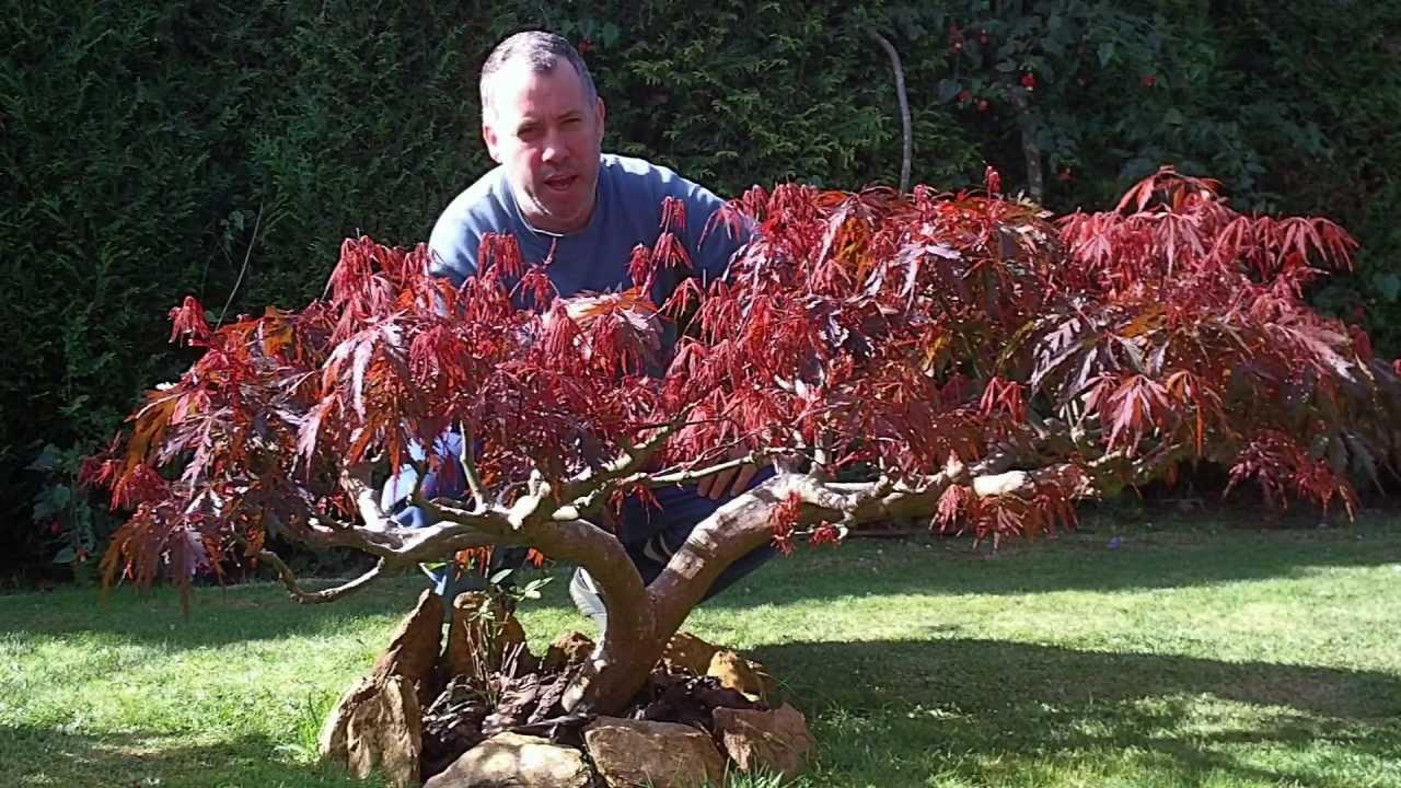 Sulfato de hierro para arboles arbustos y plantas 27 for Arboles y arbustos para jardin