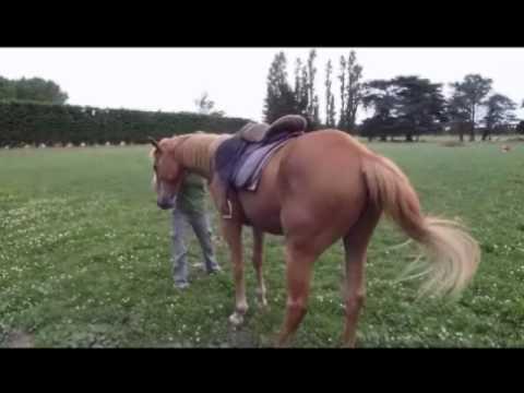 Abi's Natural Horsemanship, New Zealand - ground skills