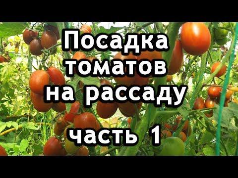 Помидоры, как посадить томаты на рассаду из семян.