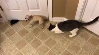 Catnip dog attack