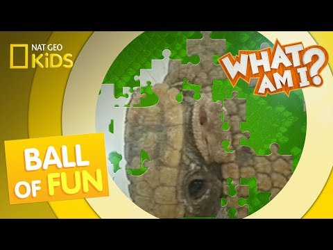 Ball of Fun | What Am I?