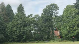 removing top from chestnut tree with cherry picker