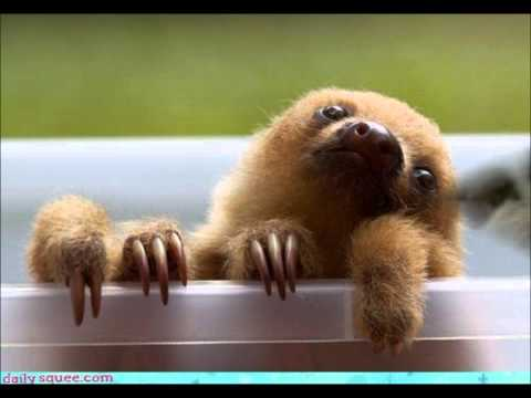 Happy Birthday With Sloths!