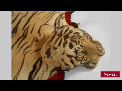 Antique Indian (Bengal) taxidermy tiger skin rug on red