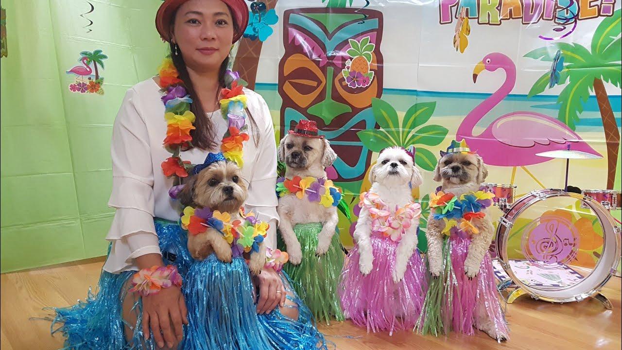 Bốn bé chó tuyệt vời dễ thương biểu diễn, ca hát, nhảy đầm cùng Mami