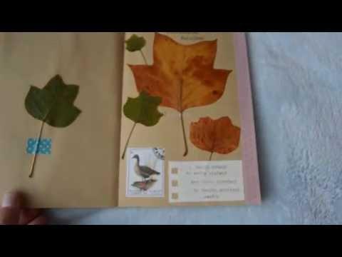 My nature journal I