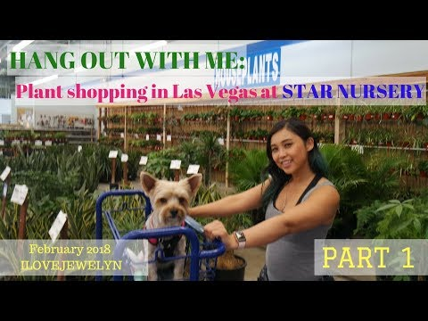 Hang out with me: Plant shopping in Las Vegas Star Nursery Part 1 | February 2018 | ILOVEJEWELYN