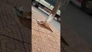 Tai nạn kinh hoàng đường Trần Hưng Đạo - Buôn Ma Thuật - DakLak