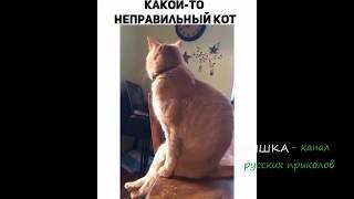 Кот сидит как человек. The cat sits like a man.