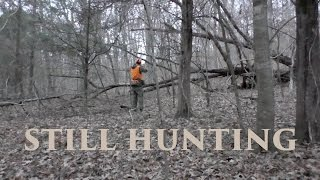 Tips for Still Hunting Whitetail Deer - TN Public Land