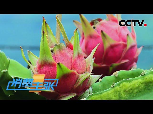 云南迎来水果丰收季 水果吃法花样百出 「消费主张」20210726 | CCTV财经