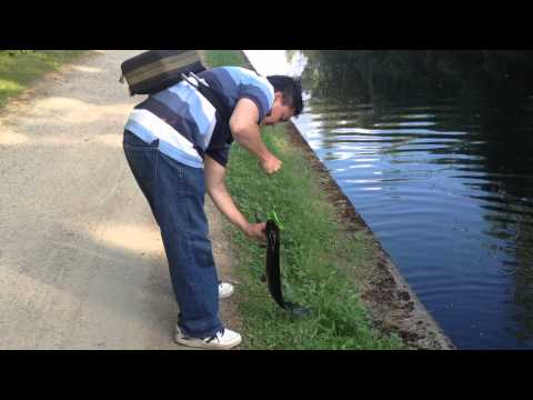 Lure Pike Fishing In Leeds & Liverpool Canal 1.
