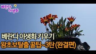 베란다에서 야생화 키우기 왕초보 탈출 꿀팁~3탄 (완결…