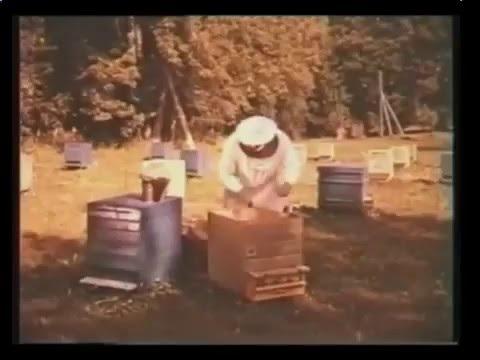 Пыльца цветочная. Полезные свойства, применение, лечение и