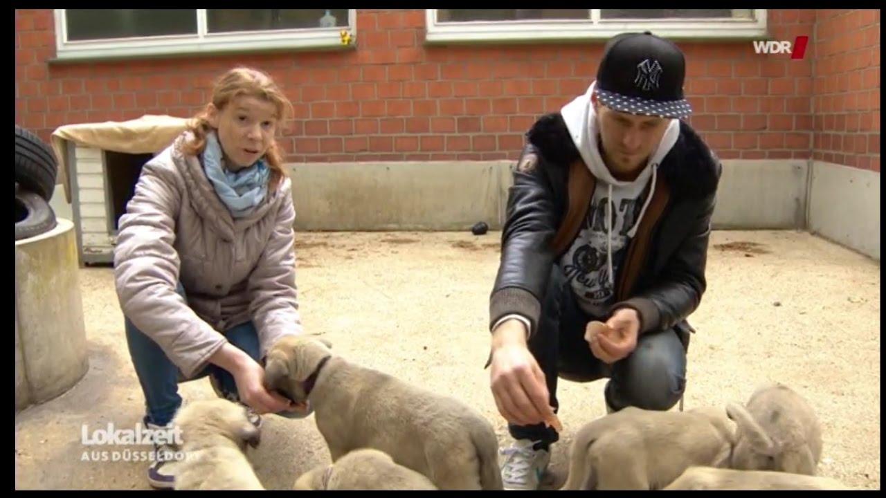 Kangal Welpeneltern Im Tierheim Mg Bericht 10517 Youtube