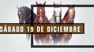 Vidéo de la course PMU TIESTO H