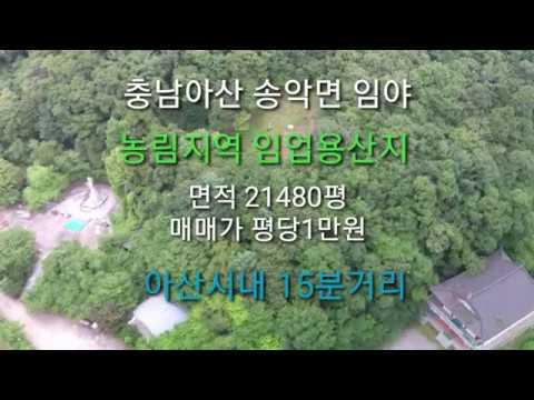(땅꾼부동산tv )충남아산  송악면 임야 농림지역 임업용산지 21480평 평당1만원 급매