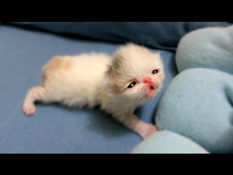 Kitten Marshmallow Eye Opening Experience 2 Weeks Old Youtube