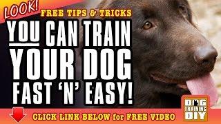 Dog Training Bakersfield | FREE Dog Training Tips & Tricks | Dog Obedience Training Bakersfield, CA