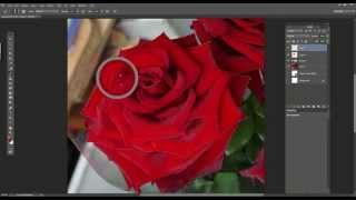 рисунок розы  с помощью планшета Wacom