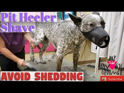 I Want You To Shave My Dog Pit Heeler