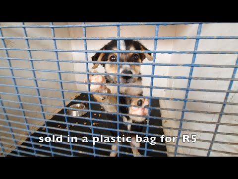 Puppy Sold In Plastic Bag- Look At Her Now!