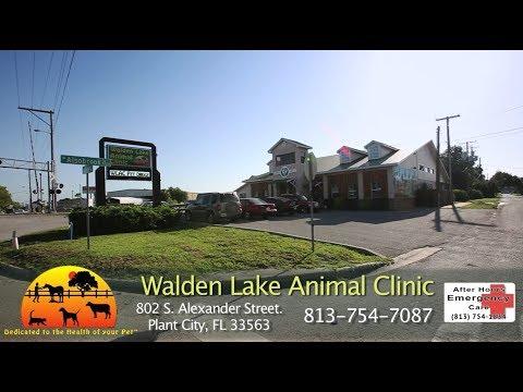 Walden Lake Animal Clinic, Plant City, FL