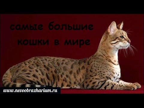 Большие клиторы golyedevkyru