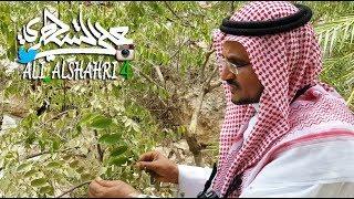 من الفروق بين شجرتي الشريان والنشم د أحمد قشاش 18-10-1439