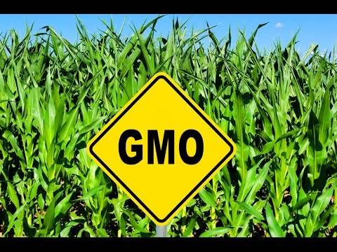 GMO Crops More Profitable? For Who?