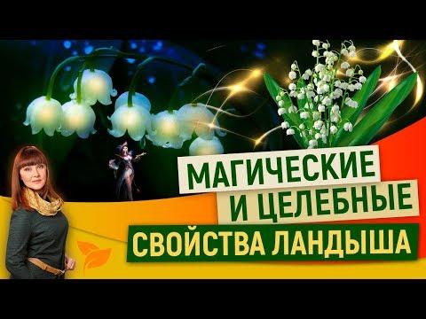 0 Какой ты, цветок ландыш: магия и тайна лесного чуда