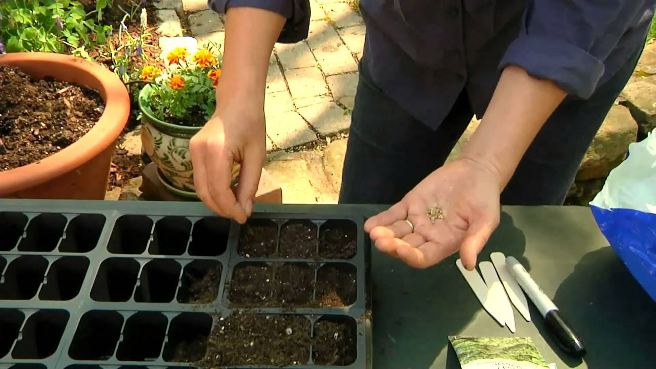 How To Sow Spinach Seeds Planting Gardening Vegetables You