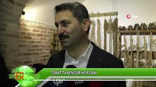 Tokat'ta kenevir heyecanı