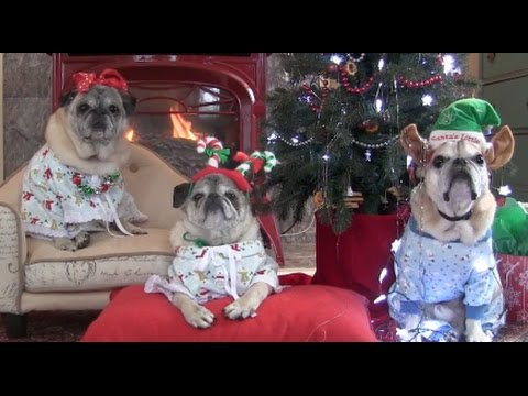 Cutest Pugs Christmas Tree Joy