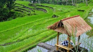 Download Mp3 Relaksasi Dengan Musik Bali Dan Indahnya Alam Bali