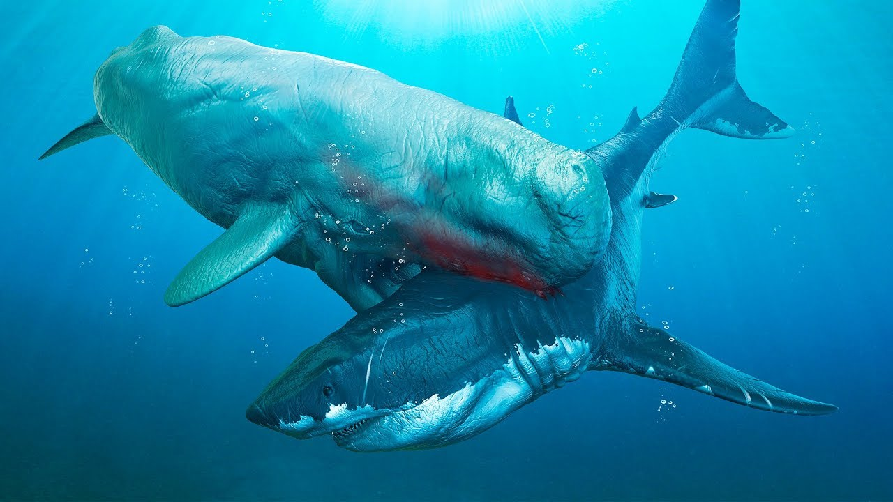 6 most dangerous megalodon enemies ever existed youtube