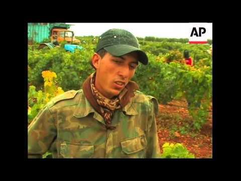 Centuries-old winemaking tradition in Morocco