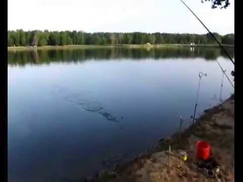 рыбалка  с. Донское Ставропольского края от Пал Палыча июнь 2014