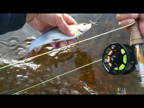 Рыбалка на нахлыст хариус