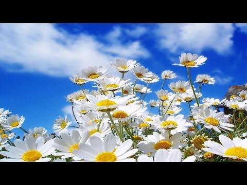 Весенний джаз (2) / Spring Jazz (2). – Acid Jazz & Smooth Jazz • ВидеоКанал «exZotikA Max»