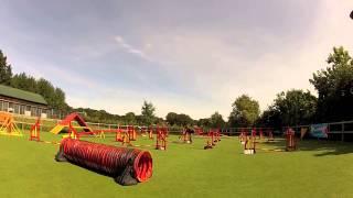Dachshund Agility - Beginners Jumping