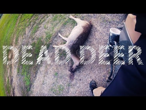 A DOE A DEAD DEER, SPY CAMS, CAMPING IN ICE, THE FROZEN MOTOVLOG thumbnail