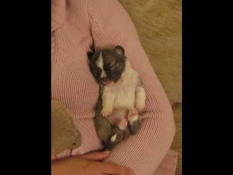 Little Dorrit having a cuddle