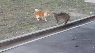 Безопасность Минск. Коты и Весна. Мы не знакомы...