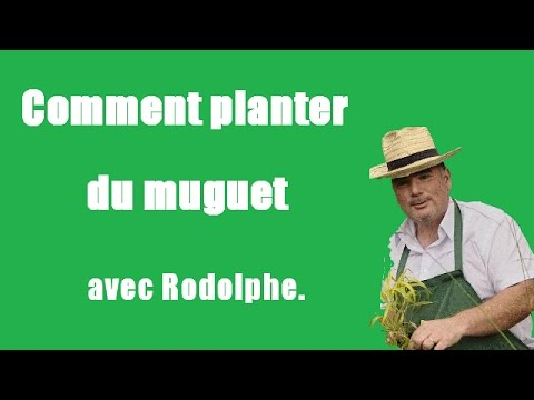 comment planter du muguet tuto vid o jardinage le jardin de rodolphe youtube. Black Bedroom Furniture Sets. Home Design Ideas