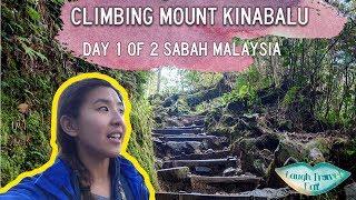 Download Lagu Climb Mount Kinabalu: Day 1 of 2 ascend to Panalaban Base Camp mp3