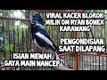 Kacer Blorok Isian Mewah  Mp3 - Mp4 Download